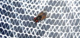 Vorteile von Insektennetzen in Fenstern